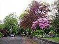Prospect Road, Dullatur - geograph.org.uk - 1311090.jpg