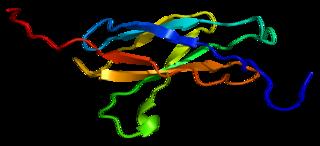 BOC (gene) protein-coding gene in the species Homo sapiens