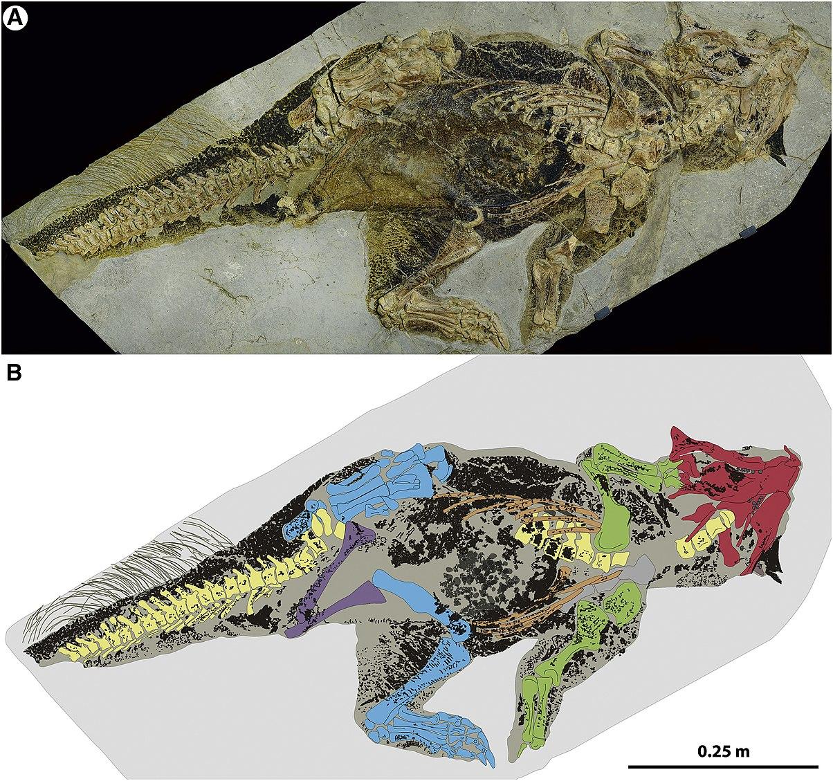 [Image: 1204px-Psittacosaurus_SMF_R_4970.jpg]