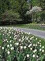 Québec-Bois de Coulonge-Tulipes.JPG
