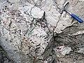 Quartzite & pebbly quartzite with jasper (Lorrain Formation, Paleoproterozoic, ~2.3 Ga; Ottertail Lake Northeast roadcut, near Bruce Mines, Ontario, Canada) 1 (47708852131).jpg