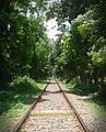 Railline, inside of rajshahi university.jpg