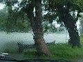 Rain (912371445).jpg