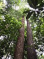 Rain forest 19.jpg