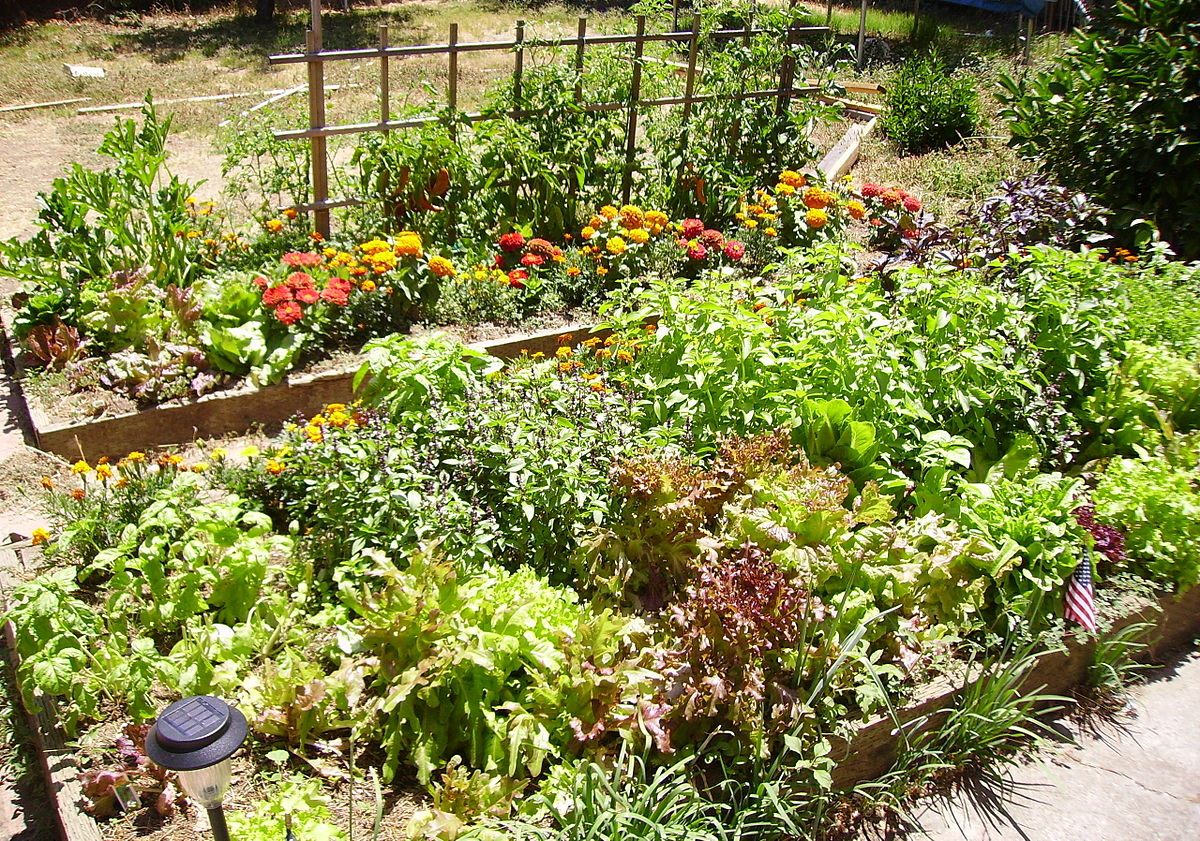 raised bed gardening wikipedia - Garden Bed
