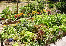 French intensive gardening - Wikipedia on raised garden table, raised garden beds, raised kitchen design, raised patio garden, raised garden designs and layouts, raised vegetable bed material, raised garden planting layout, raised vegetable plants, raised garden layout for tomatoes, raised front garden design, raised garden ideas, raised garden planner, building a tiered garden design, raised garden construction, raised garden fence design, long narrow garden design, raised planters for vegetable gardens, veggie garden design, garden beds design, raised garden plans,