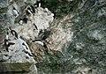 Razorbill cliffdiving.jpg