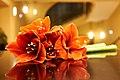 Red Amaryllis on a black table.jpg