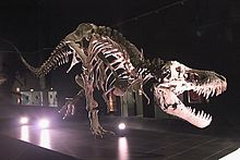 Specimens of Tyrannosaurus  Wikipedia