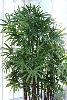 Plantas Decorativas Interior Artificiales