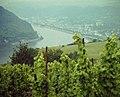 Rheintal bei Oberwesel - geo.hlipp.de - 25110.jpg