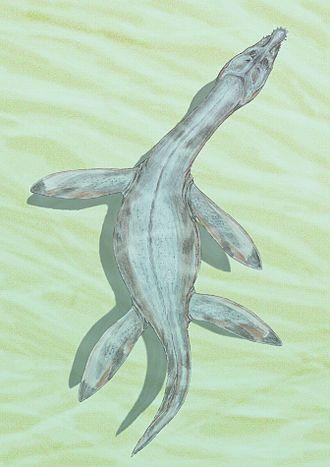 Toarcian - Rhomaleosaurus
