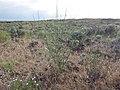 Richfield sagebrush steppe (9722961067).jpg