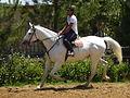 Riding 1100647.jpg