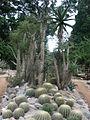 Rio de Janeiro Botanical Garden 11.JPG