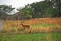 Road between Fort Portal and Rebisengo - Flickr - Dave Proffer (15).jpg