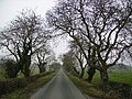 Road to Old Park - geograph.org.uk - 116375.jpg