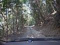 Road to Sae inari shrine , 狭上(さえ)稲荷神社への道 - panoramio (1).jpg