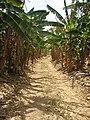 Road to presa.jpg
