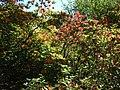"""Rododendru selekcijas un izmēģinājumu audzētava """"Babīte"""" - panoramio.jpg"""