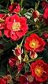 "Rosa ""Eyeopener"" o INTerop. 06.jpg"