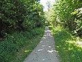 Route Forestière des Parquets (forêt de Montmorency) - panoramio.jpg