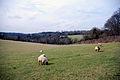 Rural view 1 (2344051942).jpg