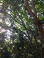 Símios no Bosque da Barra.jpg