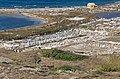 Sacred Way, Delos 04.jpg