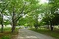Sakitama-kofun-park2011.jpg
