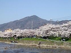 Sakura MtHiei.jpg