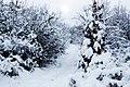 Salgóbánya - panoramio.jpg
