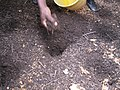 Sampling from finished faeces compost at Valley View University, Ghana (6210820325).jpg