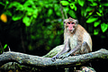 Samutsongkram Khlong Khone Mangrove Forest 3.jpg