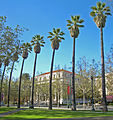 San Jose St James Palm Tree Lined.jpg