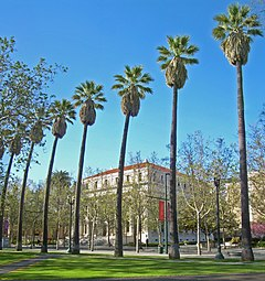 A line of palm trees along North First Street in San Jose partially screens the view west towards the old Santa Clara County Superior Courthouse.