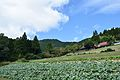 Sanuki Manno Town kawaoku 0446.jpg