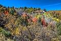 Scenic fall colours along Utah Hwy 14 - (22797959822).jpg