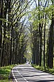 Schelmseweg in springtime, nice soft green beechleaves - panoramio.jpg