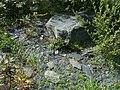 Schiste ardoisier à l'arboretum Gaston Allard.JPG