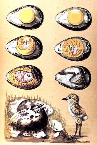 Modes of reproduction - Image: Schleiden vogel