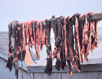 Seal meat - Seal meat hanging to dry on St. Lawrence Island