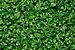 Selaginella kraussiana qtl1.jpg