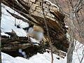 Seoraksan National Park trip Feb 2014 95.JPG