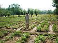 Seri Bahlol-Agriculture Land-1.jpg