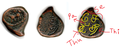 Sethupathi coin.png