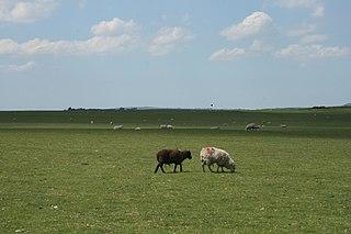 Curragh Flat, open plain in Newbridge, County Kildare, Ireland