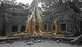 Siem Reap XVI (CAMBODIA-TA PHROM) (1844921039).jpg