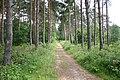 Skellingthorpe Old Wood - geograph.org.uk - 191412.jpg