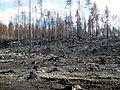 Skogsbranden i Västmanland 2014 - Brandområde utmed U668 mellan Stabäck och Hästbäck - 5624.jpg